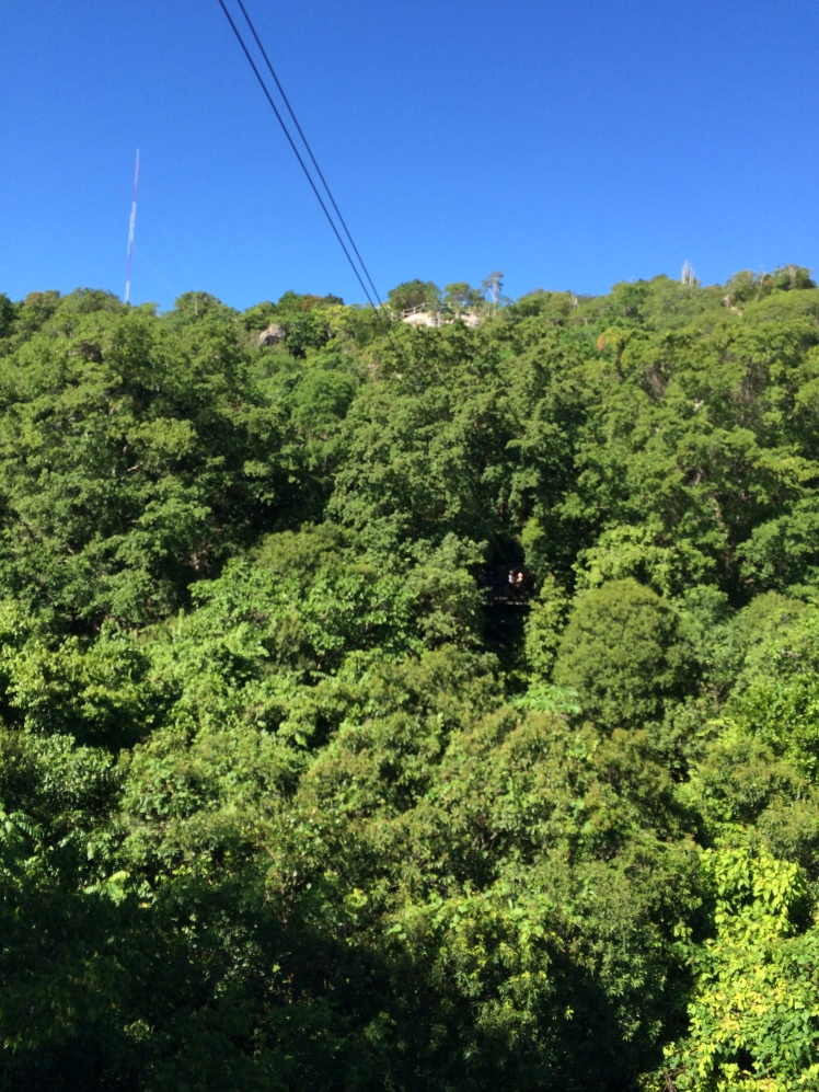 a zip-line through the trees