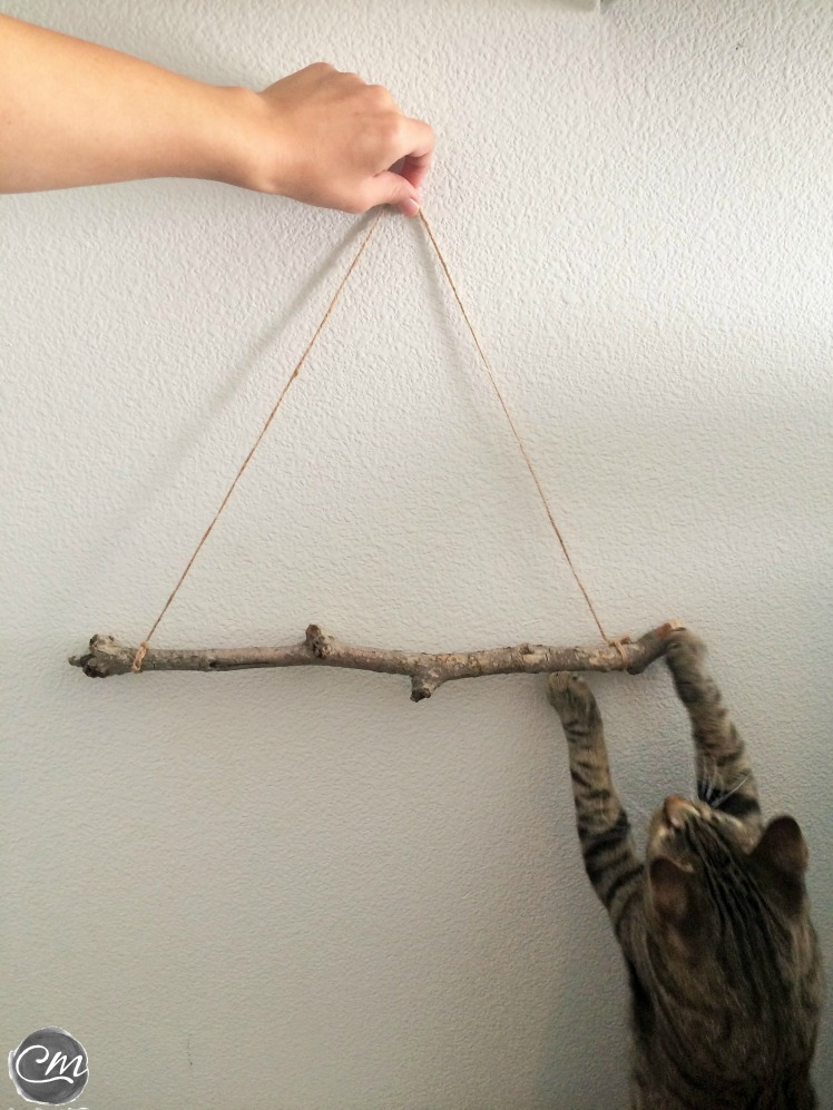 step 4: see which side of the twig looks best (make sure your pet approves)