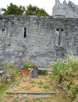 Muckross Abbey Kerry Ireland3