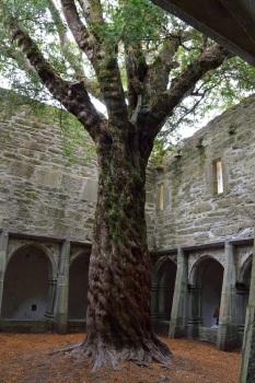 Muckross Abbey Kerry Ireland5